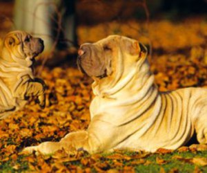 *-*, beautiful, and puppy image