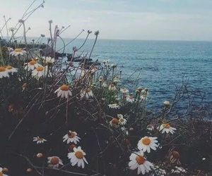flowers, sea, and daisy image