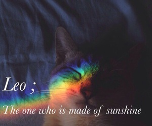cat, Leo, and quote image
