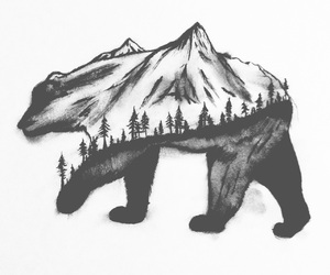 bears, beautiful, and black and white image