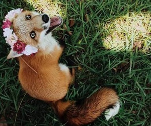 flower crown, fox, and photography image