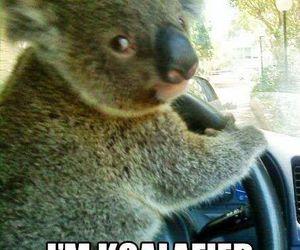 funny, Koala, and drive image