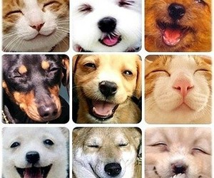 dog, smile, and cat image