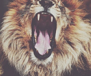 animals, beautiful, and lions image