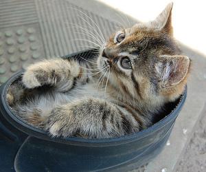 animal, cat, and kawaii image