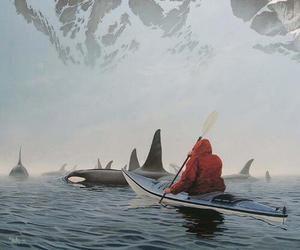 whale, orca, and nature image