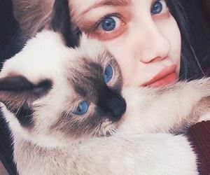 blue eyes, cat, and grunge image