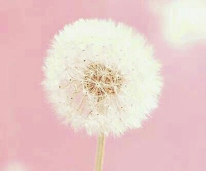 background, dandelion, and dreamy image