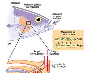 agua, respiracion, and circulacion image