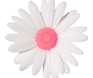 flower, overlays, and pink image