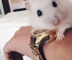 gold, hamster, and white image