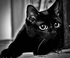 black, cat, and cute eyes image