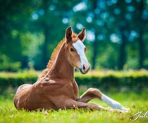 calm, grass, and horse image