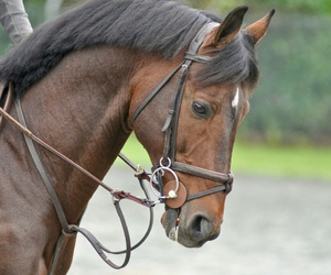 bridle, fast, and horse image