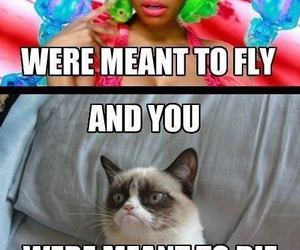 funny, cat, and nicki minaj image