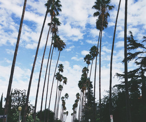 palm trees and sky image
