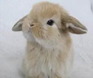 mignon, rabbit, and cute image