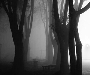 tree, black and white, and fog image