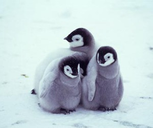 penguin, cute, and baby image