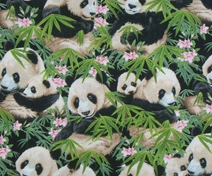 panda, bear, and wallpaper image