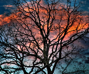 tree, photography, and twilight image