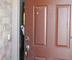 dog, funny, and door image