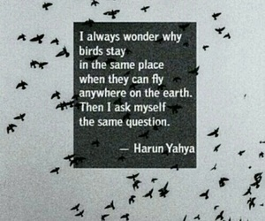 bird, quote, and fly image