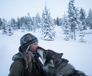 snow, wolf, and laponie image