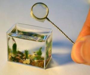 aqua, aquarium, and fingers image