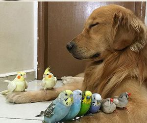 bird, dog, and cute image