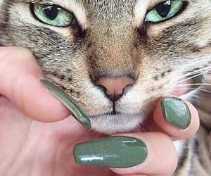 cat, nails, and green image