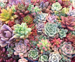 colorful, plants, and pastel image