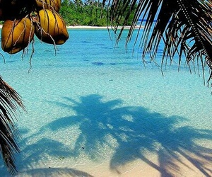 coconut, palms, and clean image