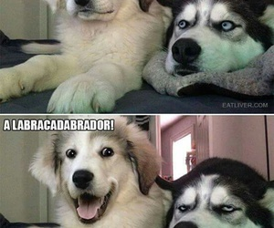 funny, dog, and husky image