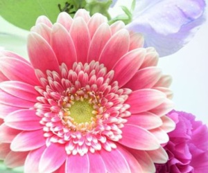colors, colourful, and flowers image