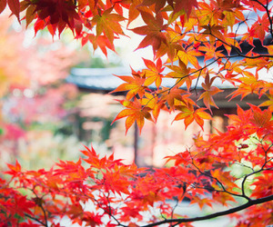 autumn, japan, and japanese image