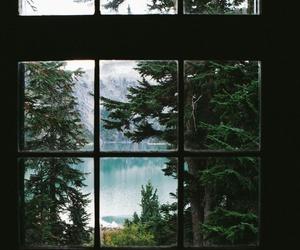 nature, window, and tree image