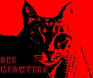 Che Guevara, funny, and cat art image