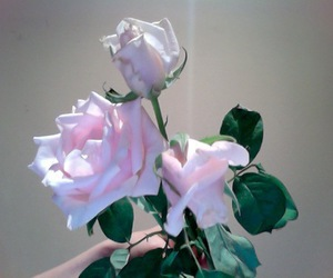 flowers, pale, and rose image