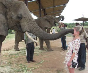 funny, elephant, and boop image