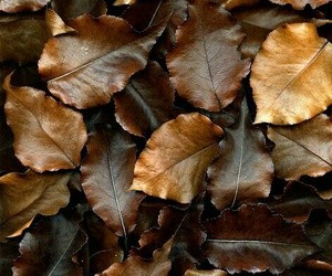 leaves, autumn, and brown image