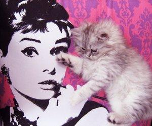 audrey hepburn, cat, and cute image
