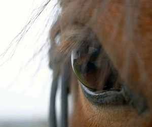 equestrian, eyes, and horse image