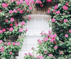 dream white house flowers image