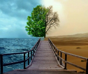 nature and tree image