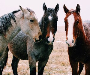 horse, beautiful, and nature image