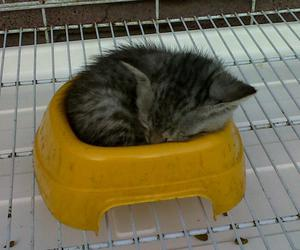 animals, baby cat, and cat image