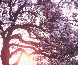 flowers, tree, and sunset image
