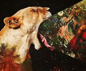 lion, stars, and pretty image