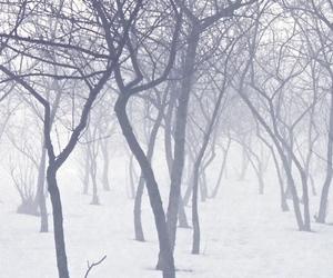 mist, snow, and trees image